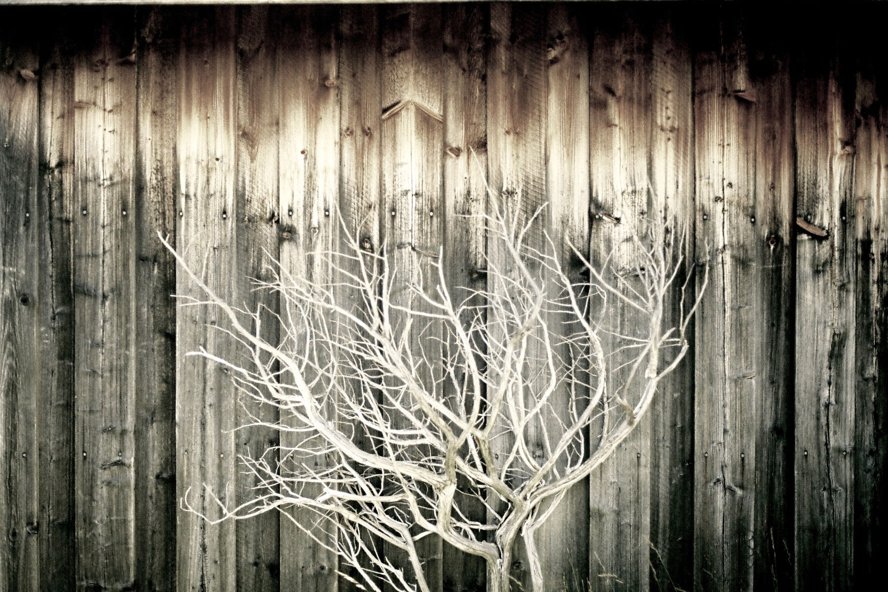 tree-on-wood-(1)