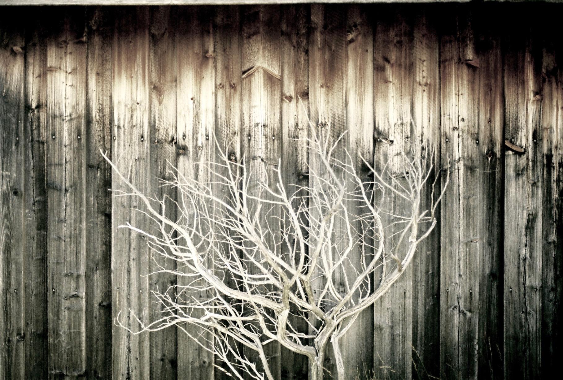 tree on wood (2)